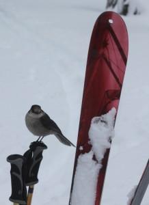 whiskey jack on ski poles